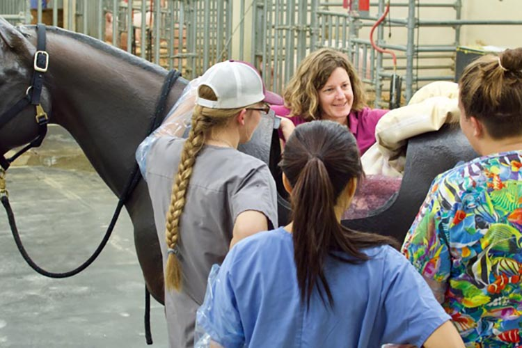 Dr. Julie Cary teaches palpation using life-size horse model