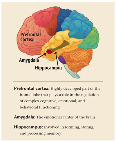 Graphic of Brain